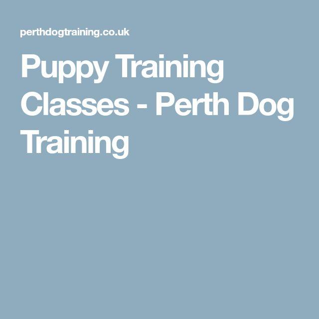 Puppy Training Classes - Perth Dog Training