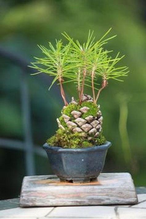 39 schöne Bonsai-Bäume Ideen für den Innenbereich Mini-Garten #Kokedamasideas #Bäume
