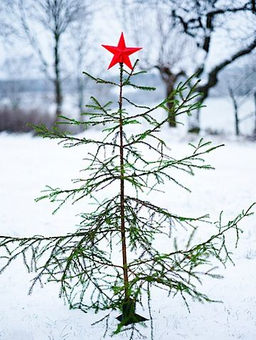 Bare tree with red star