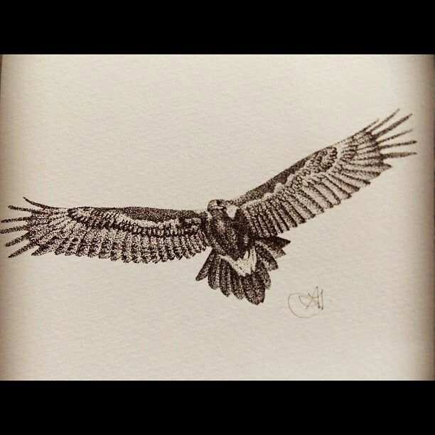 Wedge Tailed Eagle stippling.