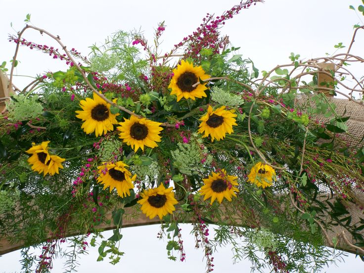 Decorated Wedding Arch in Sunflowers.  Perfect for a country wedding.  Designed by Colonial Florist, Gordonsville, VA.