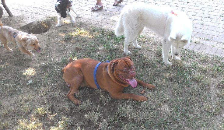 14/07/2015 - Torino con Ricky, Billo, e Temi