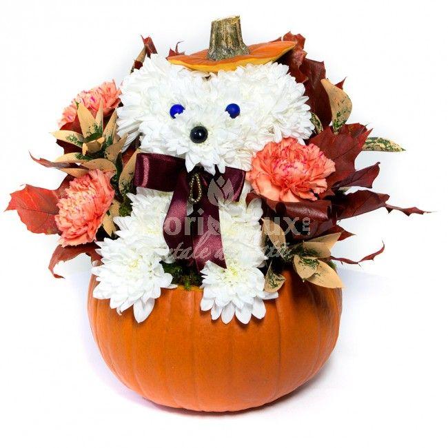 Idee inedita de cadou Halloween, flori Halloween, decor Halloween -> https://www.floridelux.ro/catelus-din-flori-halloween.html 🎃 doar de la specialistii #floridelux, livrare gratuita oriunde in Romania, inclusiv in sate! 🎃