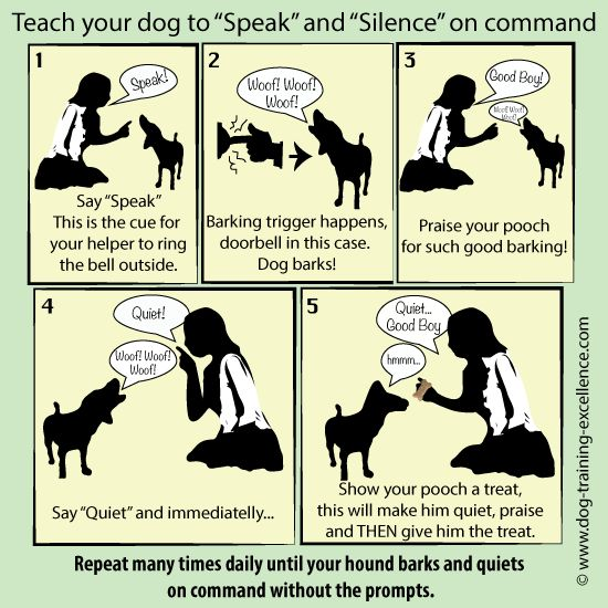 stop barking dog, Teach your dog to speak - Barking command