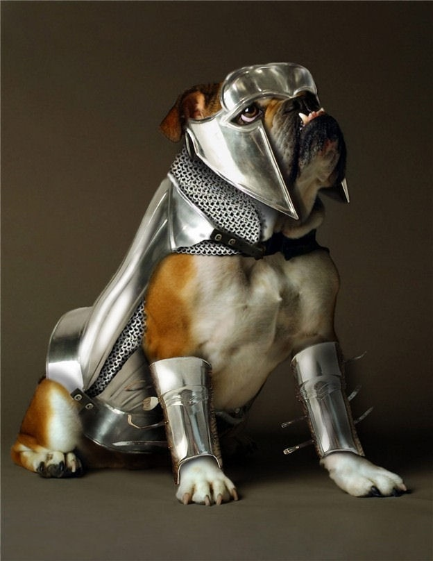 Bulldog Halloween