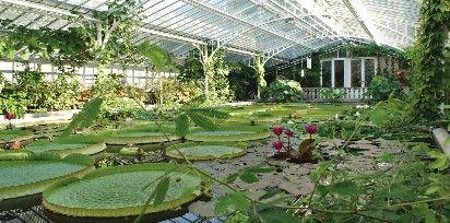 Freizeit in München: Botanischer Garten Victoriahaus                                                                                                                                                      Mehr