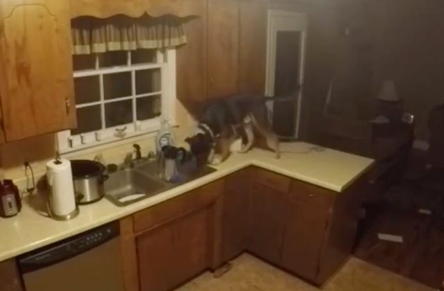 Intrigado com as mudanças que aconteciam na casa quando ele saia, o dono de Fritz deixou uma câmera escondida na residência. Para sua surpresa, descobriu que seu cachorro era um faxineiro!