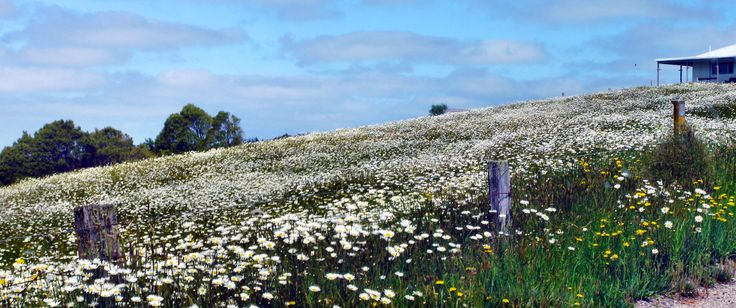 A field of flowers, somewhere between Melbourne and Brisbane