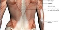 Exercises for the Lower Back & Love Handles | eHow.com
