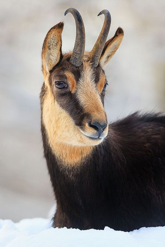 St. Hubertus - Unterhaltsam und informativ durch die Welt der Jagd…