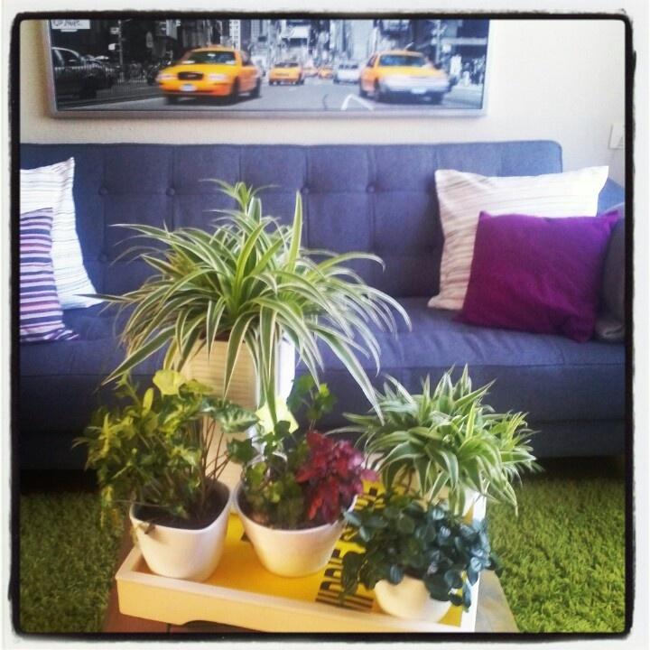 Plants together