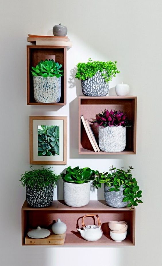 wooden crate shelves for displaying plants
