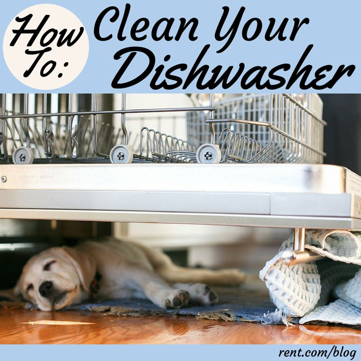 how to clean out your dishwasher