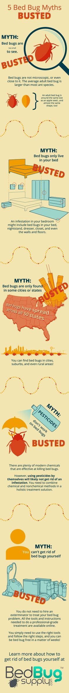 5 Bed Bug Myths BUSTED (Infographic)