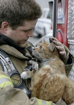 Thank you, Big guy...<333 //Saving cats!...The strength and courage to rescue all your loved ones.