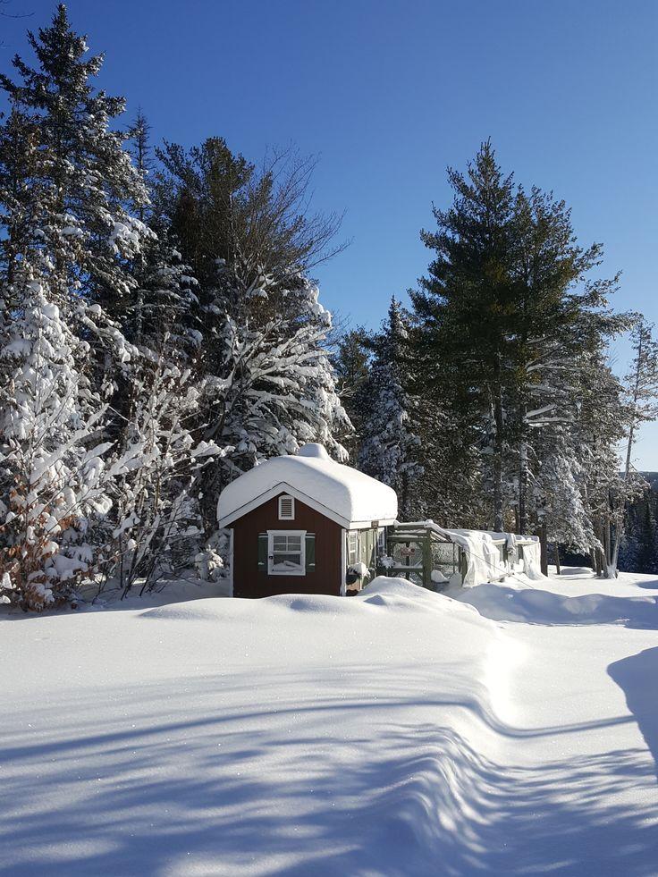 farm houses winter scenes | ... Farm in Snow Chickens in ...  |Winter Scenes With Chickens
