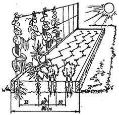 Глава 7. Как можно уплотнить посадки, или соображения для любителей совмещать