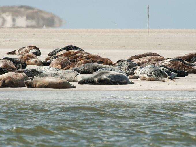 Terschelling en Vlieland liggen in de Waddenzee: Unesco Werelderfgoed sinds 2009.  (www.survivingthenetherlands.com)