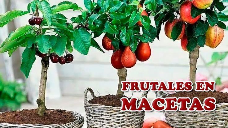 7 Cuidados Clave para Cultivar Árboles Frutales en Maceta - Cuidando el ...