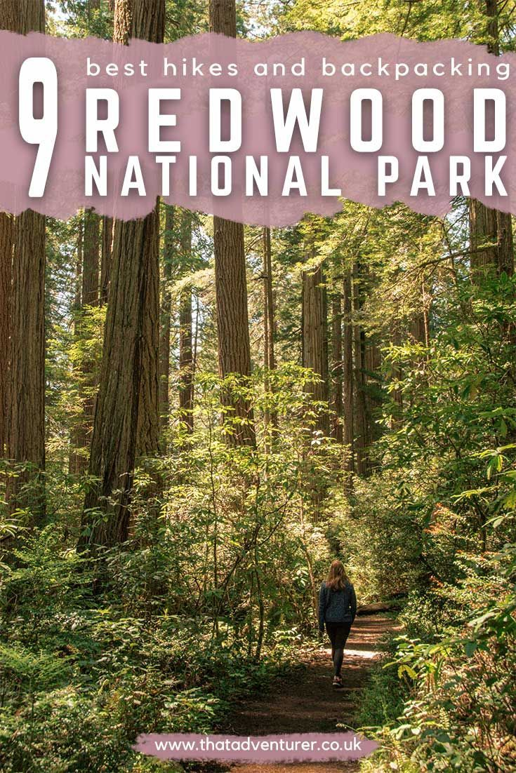 9 Best hikes in Redwood National Park