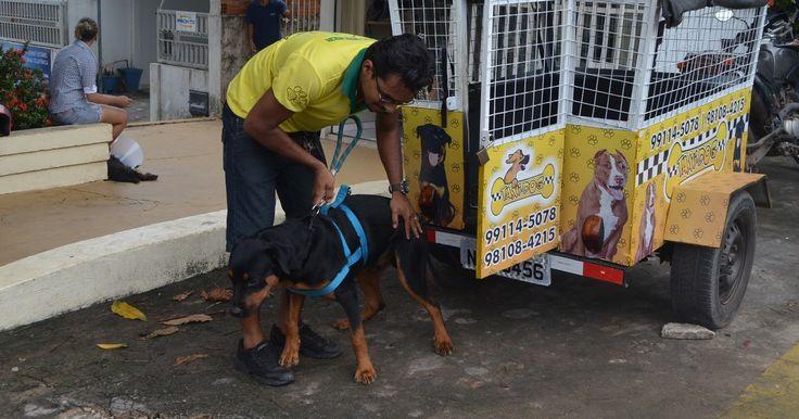 Adestrador cria 'moto-táxi' exclusivo para transporte de cães em Macapá