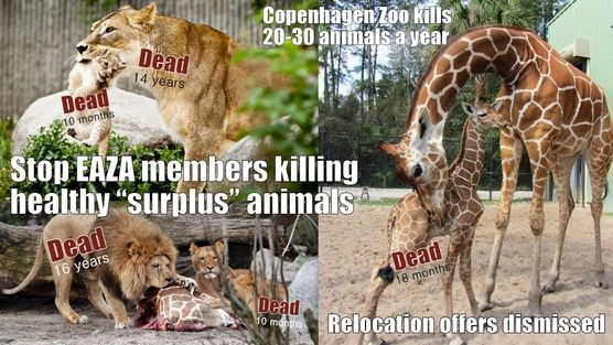 SPEAK OUT!  DEMAND CHANGE!  Help STOP the MORALLY UNCONSCIONABLE slaughter of healthy animals at zoos!   PLZ Sign & Share Widely!  Goal = 250,000 signatures