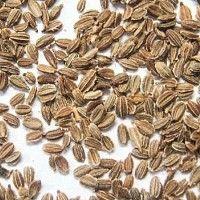 Подготовка семян к посеву — FloweryVale.ru