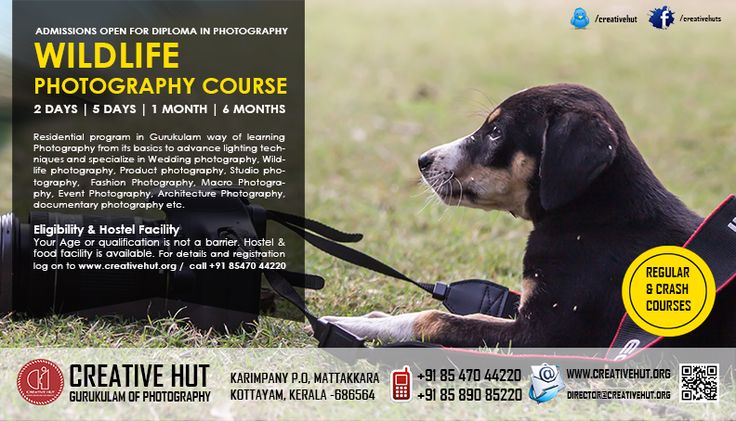 Admission Open for Wildlife Photography Courses http://www.creativehut.org