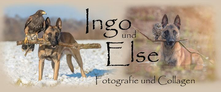 Startseite - Ingo und Else - pictures | Owl and Dog Friendship!
