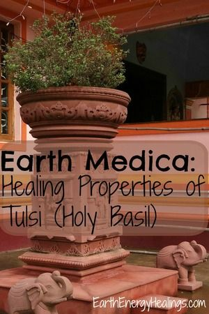 Earth Medica: Healing Properties of Tulsi. Vishnu regarded Tulsi as a sacred herb and to this day it is prayed to by those faithful to Hinduism. More on Tulsi here: