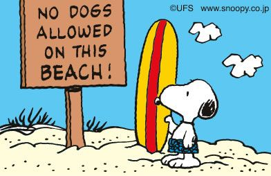 No dogs allowed on this beach!