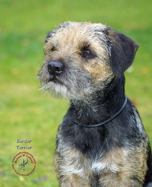 Dog Toys For Border Terriers
