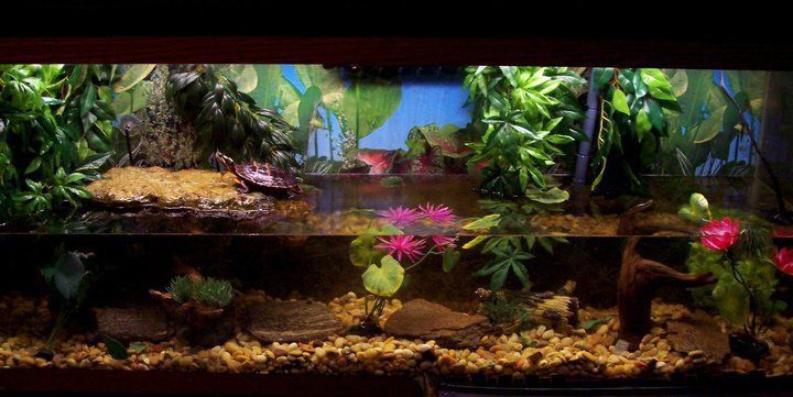 turtle tank inspiration