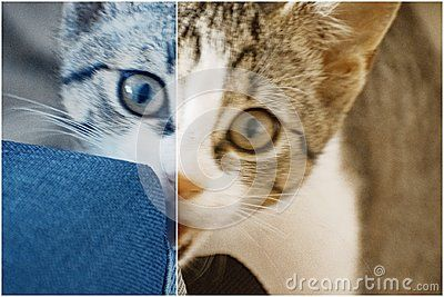 Small white kitten bites bag lying on the carpet.