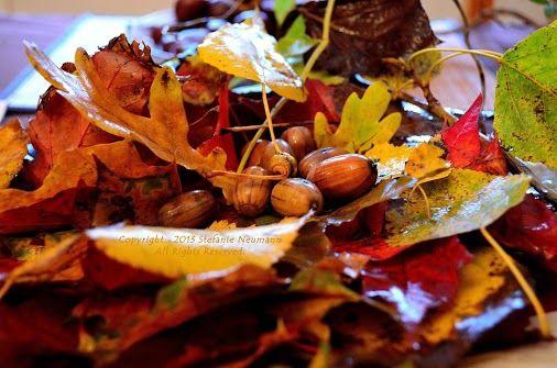 *Was Ich Heute Auf Meinem Morgenspaziergang Gefunden Habe* - Regen, Reinigung, Erdung, Farben, Freude & mehr schöne Herbstdinge... -- by Steffi on 2013-10-12