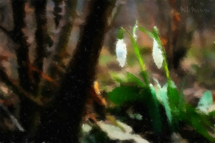 Have you heard the Snowdrops ringing Their bells to themselves? Smaller and whiter than the singing Of any fairy elves Who follow Mab their Queen When she is winging On a moth across the night And …