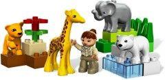 4962-1: Baby Zoo