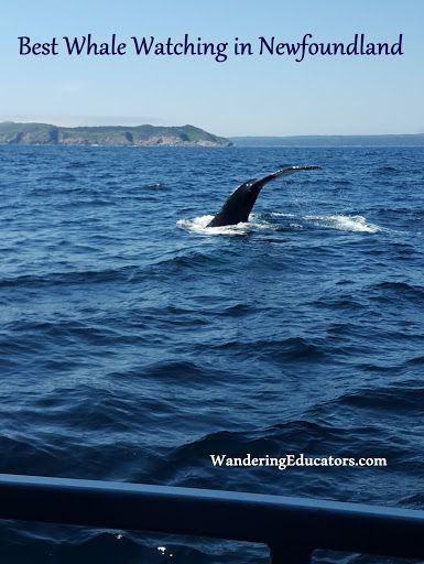 Best whale watching in Newfoundland - tips and photos