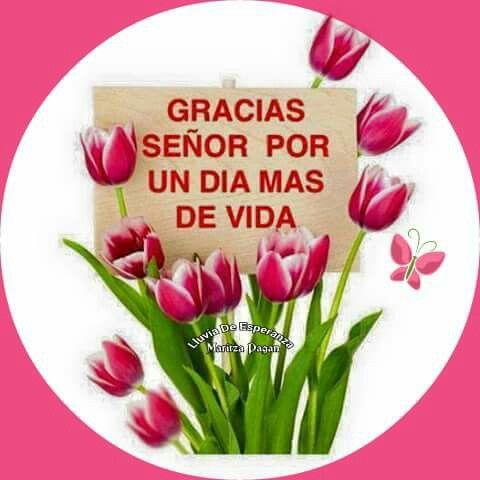 849 best images about gracias dios on pinterest for Alquiler piscina por un dia