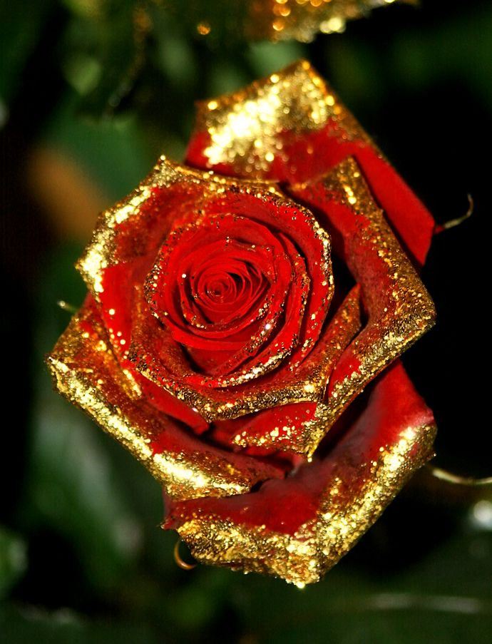 May all your roses be dipped in gold
