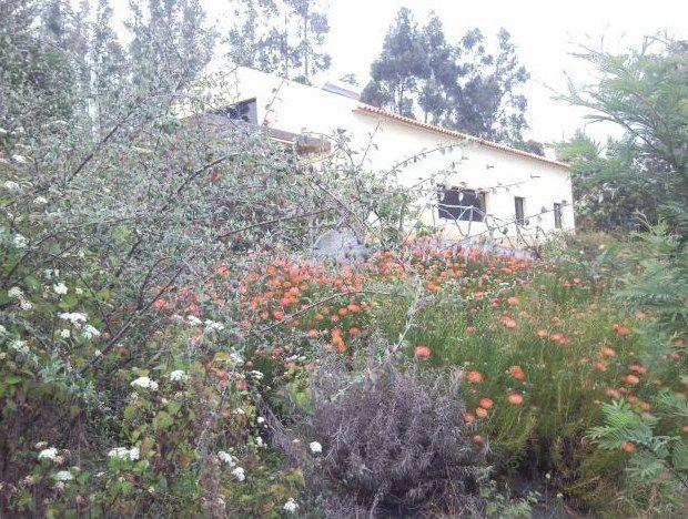 Quinta em Santa Cruz, Gaula... com 22.000 m2 de terreno exploração floricultura com poço e sistema de rega automática... moradia tipo t3 com vista mar formidável... preço 277.500€ ligue 963701529 e venha ver, agora!!! www.decisoesvibrantes.com