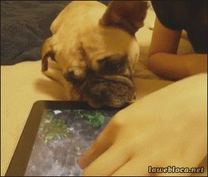 This iPad Thingy is Making Me Thirsty!  Click to see the animated GIF!