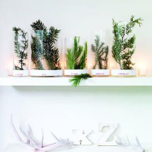 Vases of varying heights contain conifer sprigs sitting in an inch of water   Sunset Magazine
