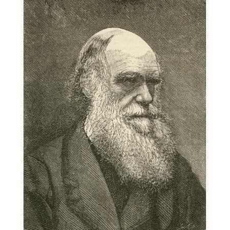 Charles Robert Darwin 1809 Canvas Art - Ken Welsh Design Pics (12 x 15)