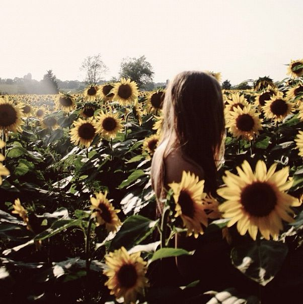 Sunflowers~<3<3<3