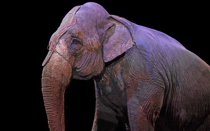 Great news! India has banned the use of all wild animals in circuses!
