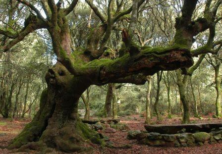 alberi secolari in sardegna - Cerca con Google
