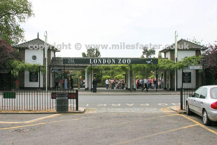 Gates of london zoo london pinterest gates london for Garden room london zoo