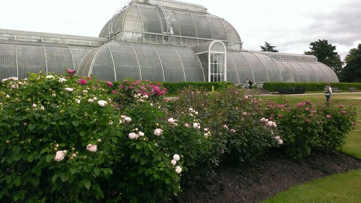 Palm House and rose