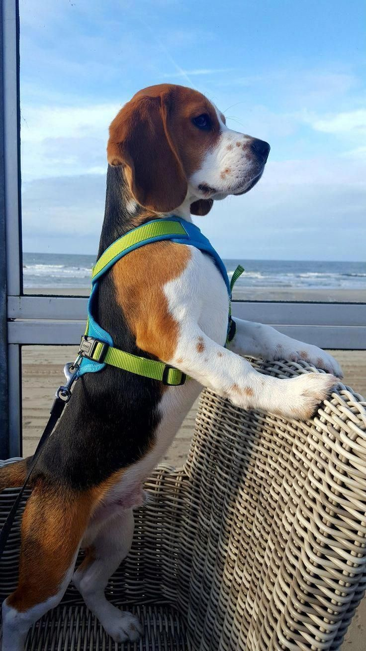 All About The Friendly Beagle Pup And Kids Beaglelover Beaglemom